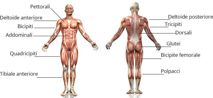 ellittica muscoli coinvolti